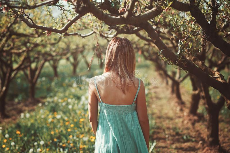 Woman alone in a orchard stock photo