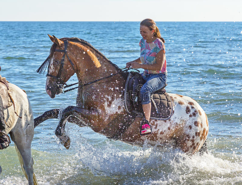 Woman and appaloosa horse stock photography