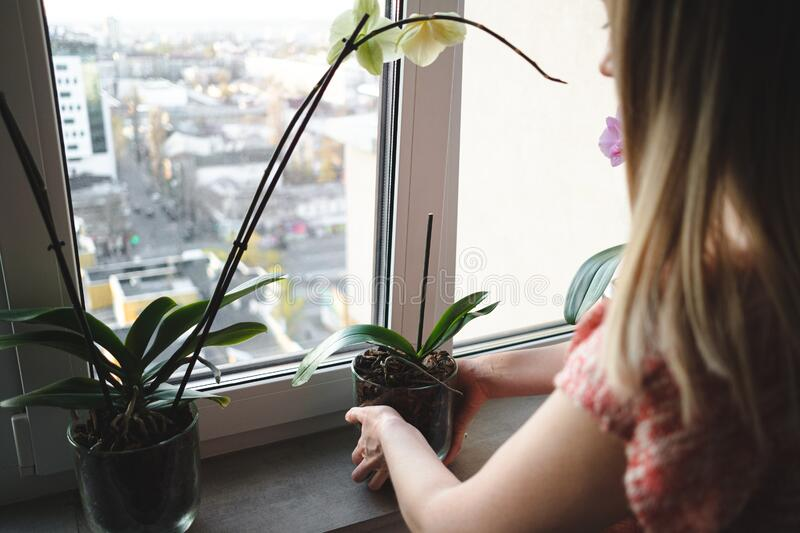Woman arranging flowers in the house. Young beautiful woman arranging an orchid flower glass pot in the house stock image
