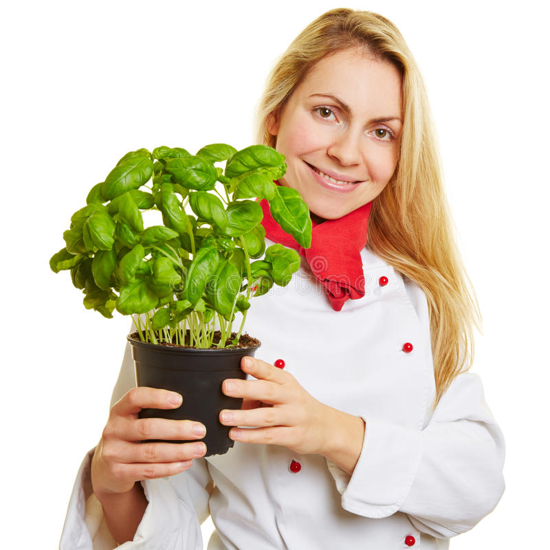 Woman as cook with basil herbs. Happy young woman as chef cook with basil herbs in her hands royalty free stock photo