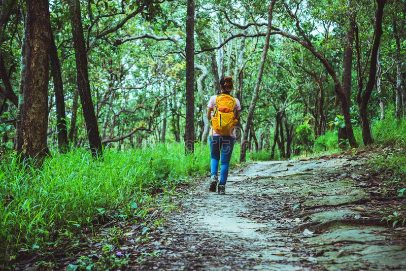 Woman Asian travel nature. Travel relax. Walk study the path Nature in the forest royalty free stock photos