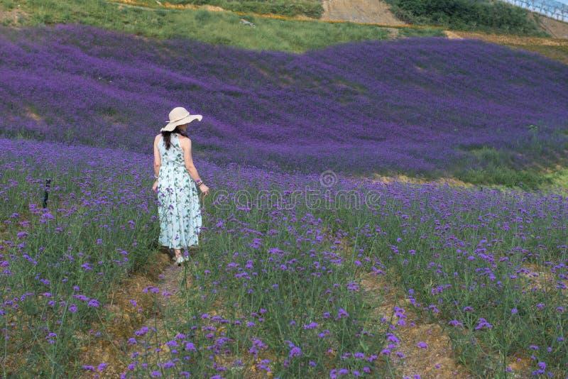 Woman'back auf dem Lavendel-Gebiet stockfotografie