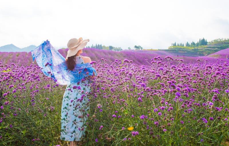 Woman'back auf dem Lavendel-Gebiet lizenzfreie stockfotos