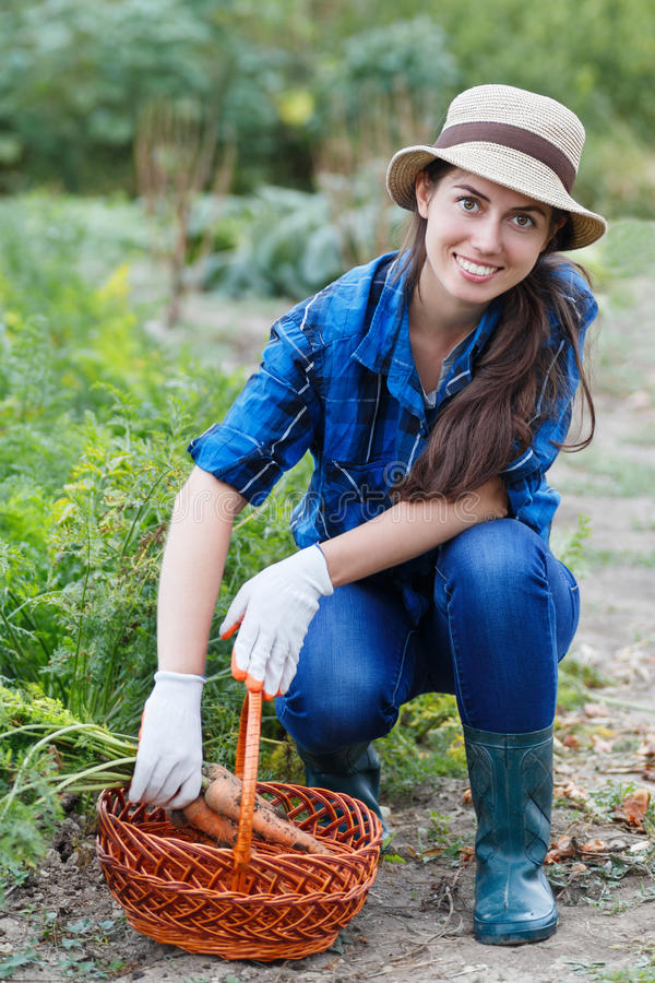 Woman with a basket of harvested carrots royalty free stock photo