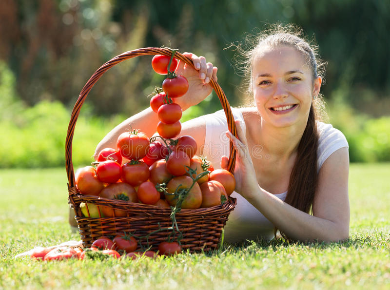 Woman with basket of harvested tomato stock photography