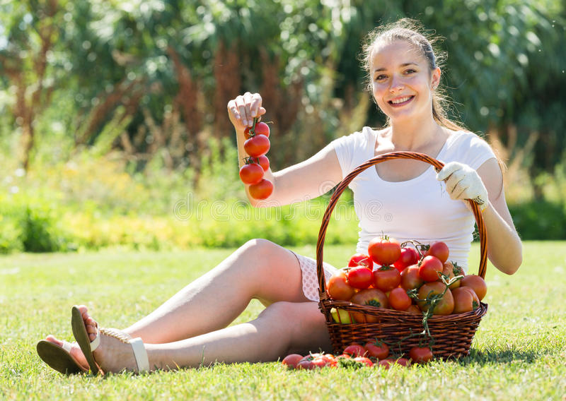 Woman with basket of harvested tomato stock images