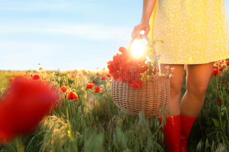 Woman with basket of poppies and wildflowers in sunlit field, closeup. Space for text stock photo