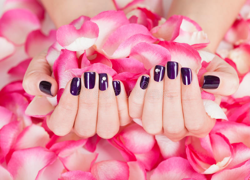 Woman with beautiful nails holding petals royalty free stock photos