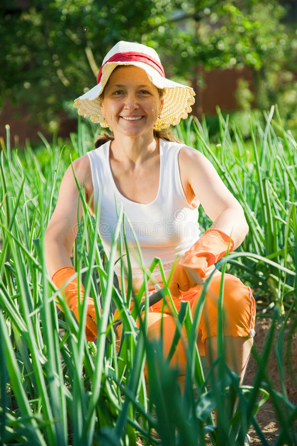 Download Woman  in bed of onion stock photo. Image of agriculture - 15299806