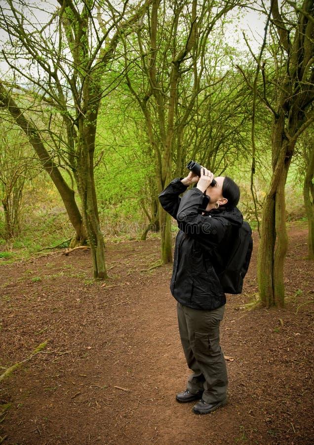 Download Woman birdwatching stock photo. Image of tree, wild, green - 24121322