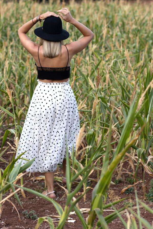 Woman walking in corn field stock photos