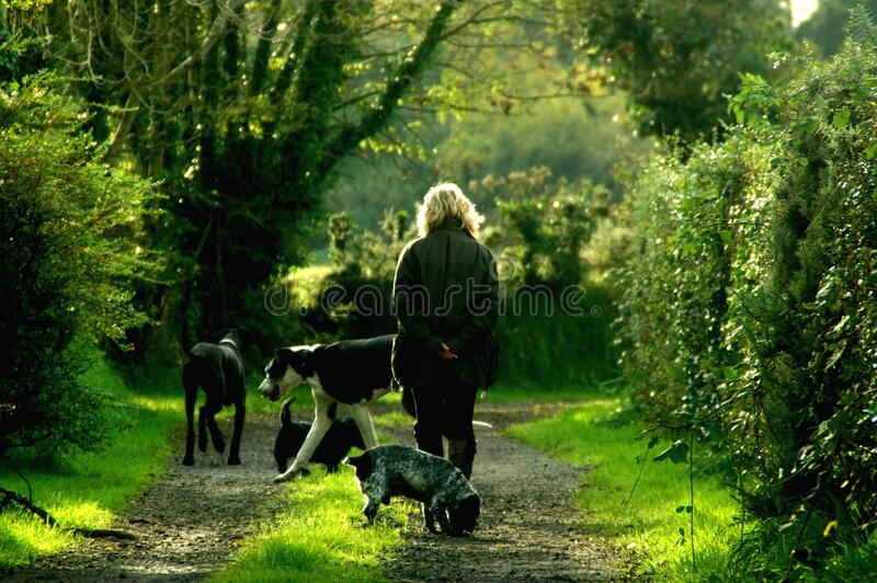 Woman in Black Jacket and 4 Dogs Walking on Dirt Path Between Trees royalty free stock photos