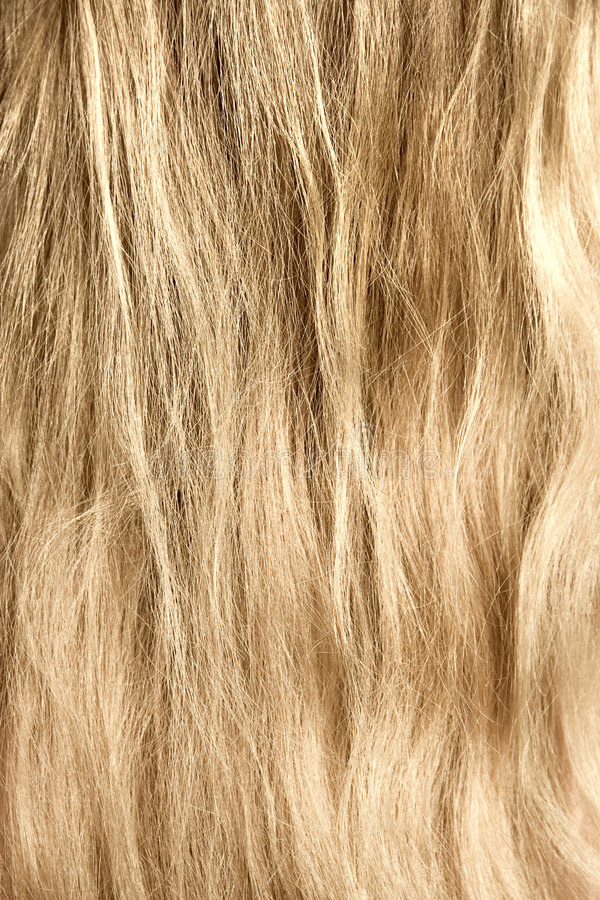 Woman blond and goldish hair.  royalty free stock photography