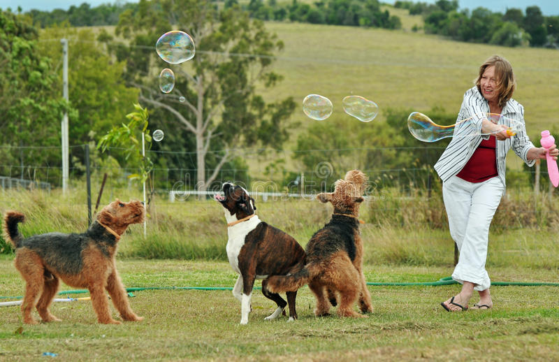 Woman blowing bubbles playing with her dogs. Woman with her pet purebred Airedale and Boxer dogs having fun, playing with a bubble wand on a beautiful summer day