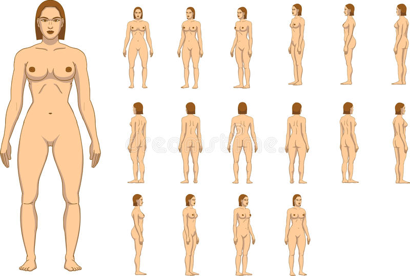 Woman Body Anatomy Stock Vector Illustration Of Image 96042027