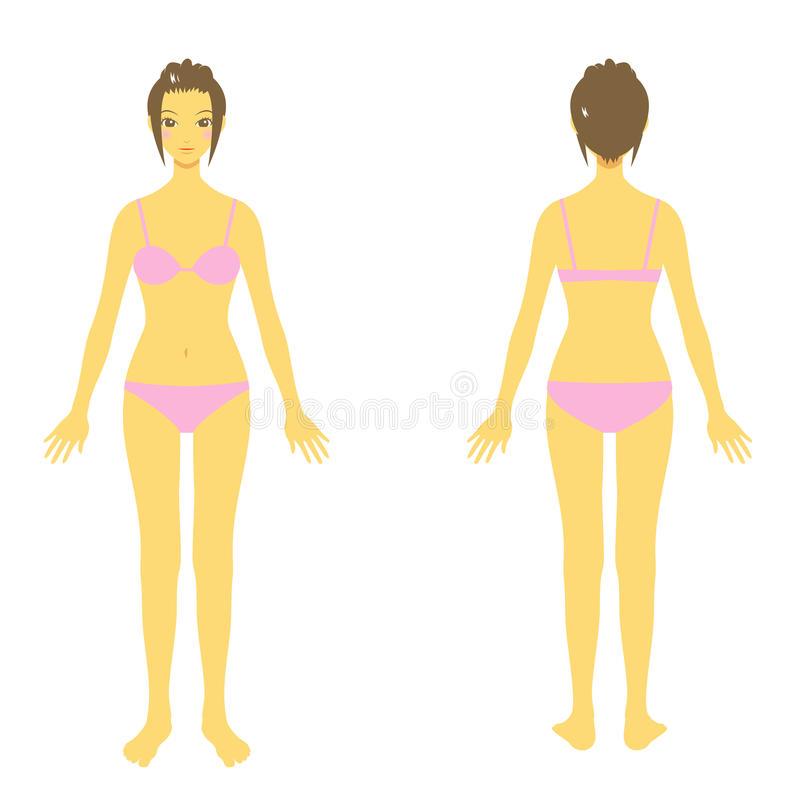 Download Woman body stock vector. Illustration of girl, suit, illustration - 31144286