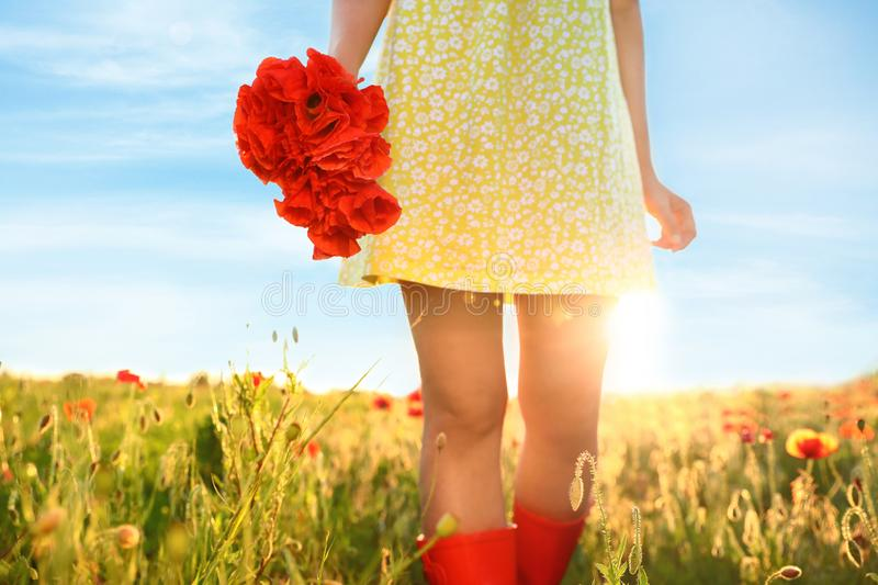 Woman with bouquet of poppies in sunlit field. Closeup stock images