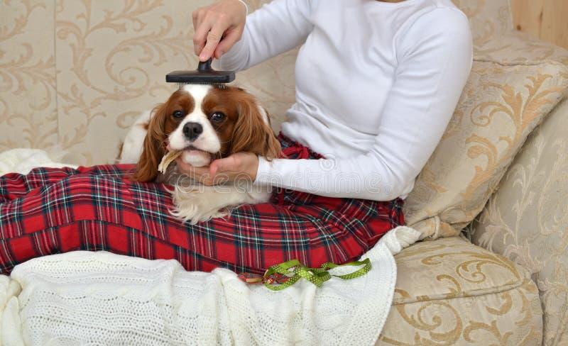 Woman Brushing Lovely Dog royalty free stock image