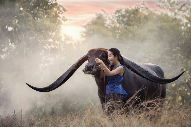 Woman with Buffalo in thailand stock photos