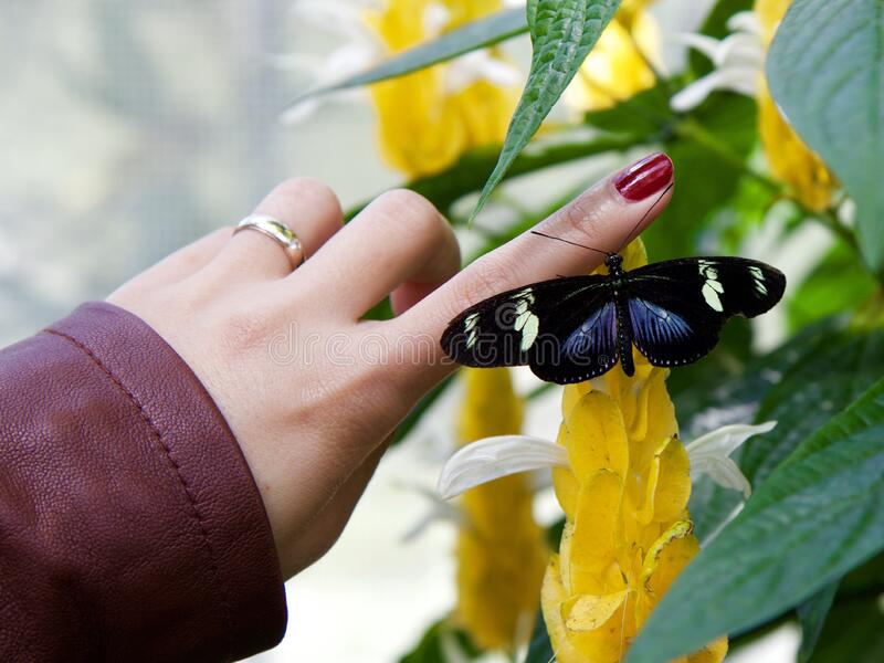 Woman with butterfly on finger stock images