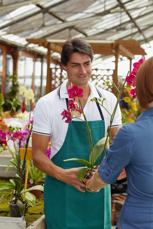 Woman buying orchids stock photography