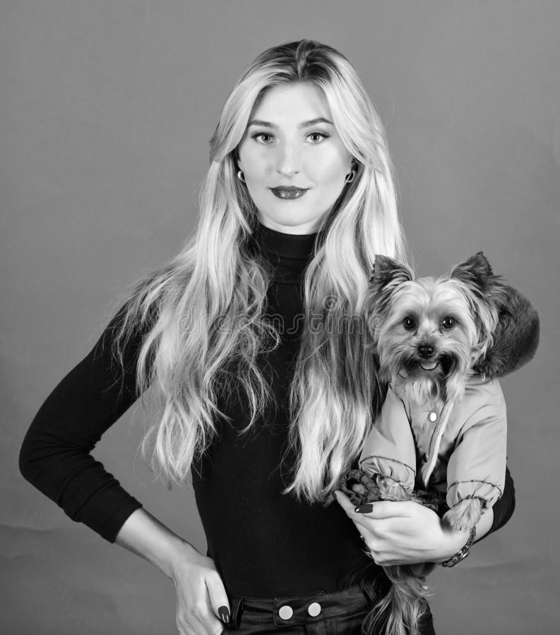 Woman carry yorkshire terrier. Dogs need clothes. Apparel and accessories. Pet supplies. Dressing dog for cold weather. Which dog breeds should wear coats stock images