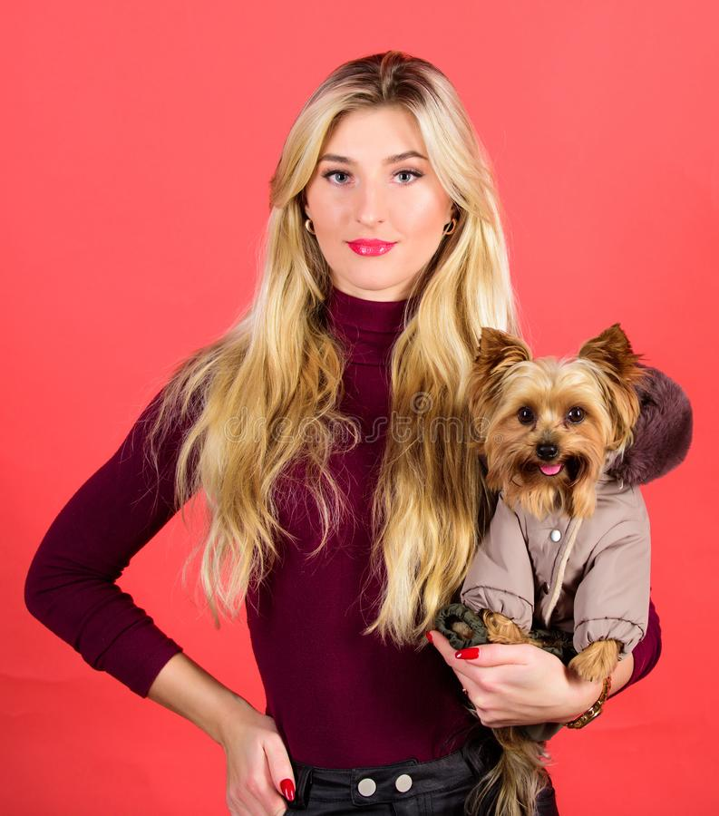 Woman carry yorkshire terrier. Dogs need clothes. Apparel and accessories. Pet supplies. Dressing dog for cold weather. Which dog breeds should wear coats stock image