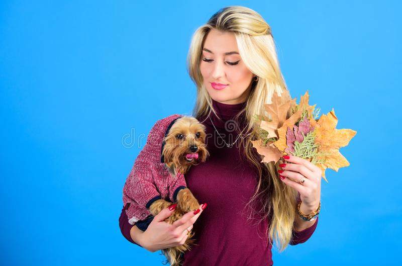 Woman carry yorkshire terrier. Dogs need clothes. Girl attractive blonde hug cute dog. Apparel and accessories. Pet. Supplies. Dressing your dog for cold stock photos
