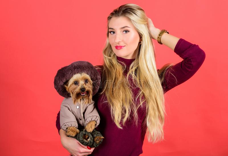 Woman carry yorkshire terrier. Make sure dog feel comfortable in clothes. Apparel and accessories. Dressing dog for cold. Weather. Which dog breeds should wear royalty free stock photo
