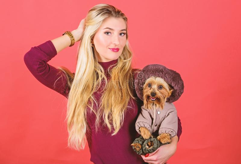 Woman carry yorkshire terrier. Make sure dog feel comfortable in clothes. Apparel and accessories. Dressing dog for cold. Weather. Which dog breeds should wear stock photos
