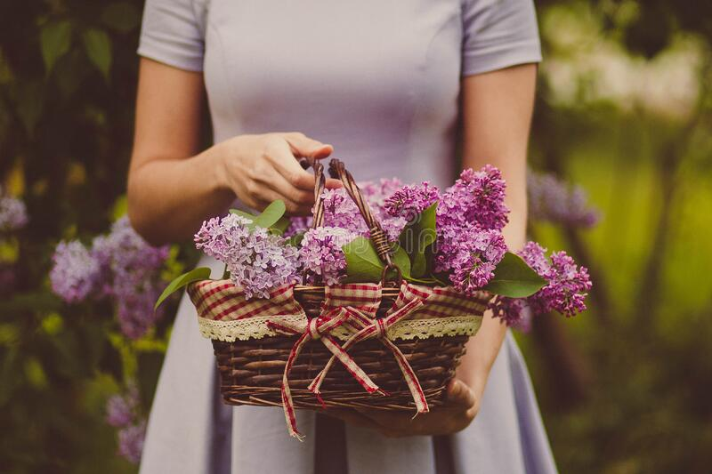 Woman Carrying Purple Flowers royalty free stock photo