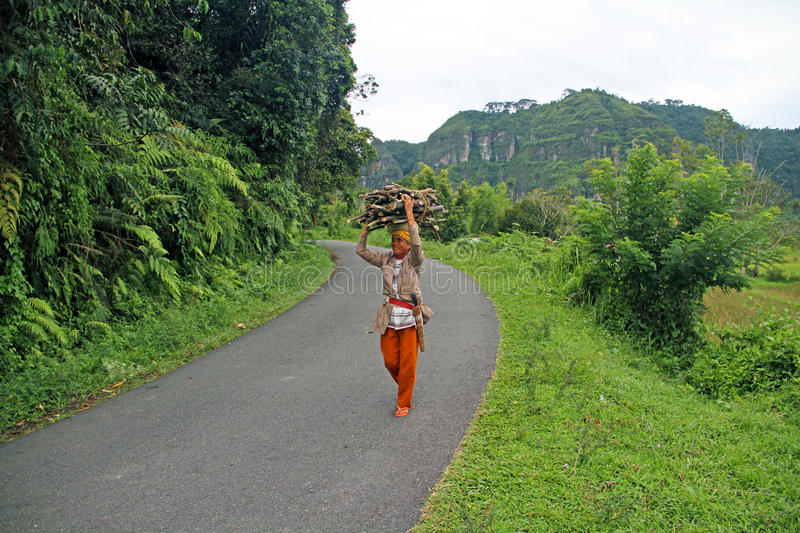 WOMAN CARRYING WOOD IN INDONESIA. A woman walking along a road carries wood in West Sumatra, Indonesia stock photography