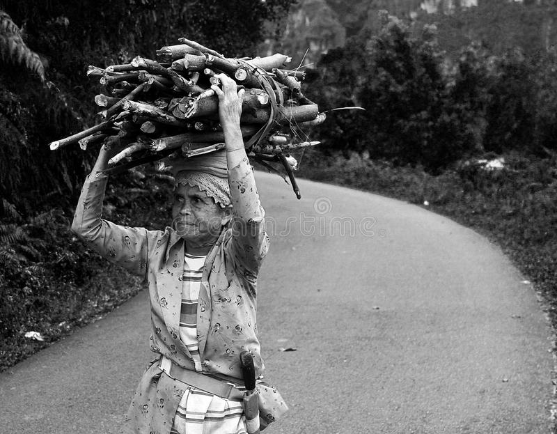 WOMAN CARRYING WOOD IN INDONESIA. A woman walking along a road carries wood in West Sumatra, Indonesia royalty free stock images