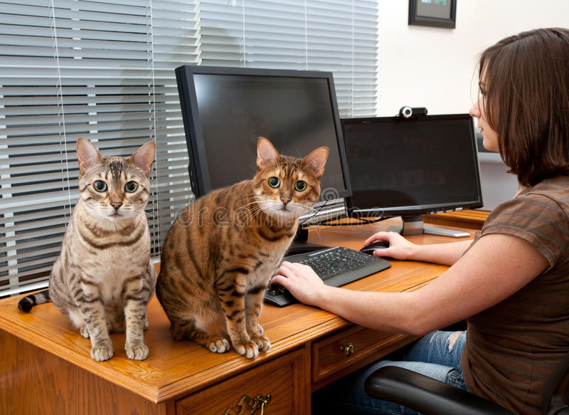 Woman and cats at computer desk royalty free stock photo