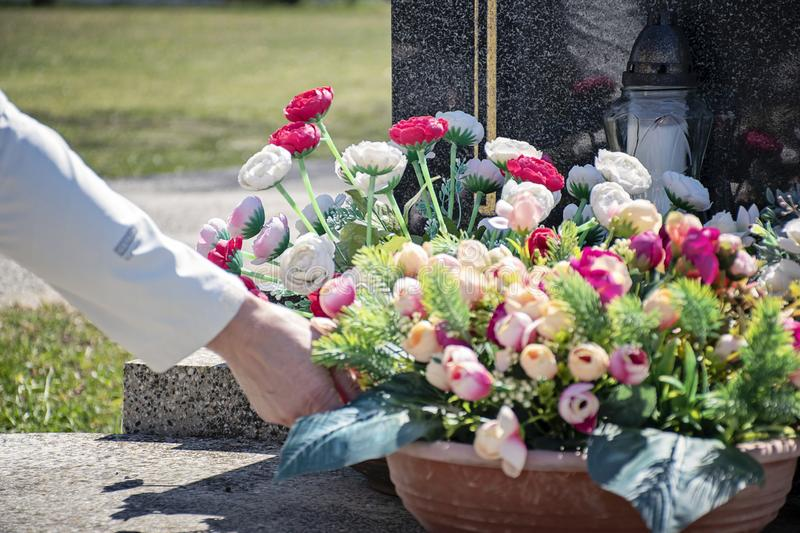 Woman at cemetery put flowers on the grave in sunny day stock photos