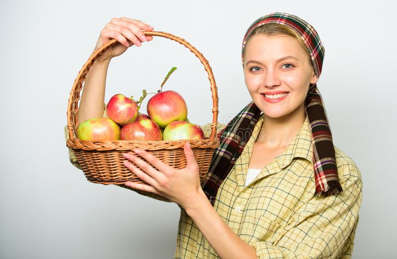 Woman cheerful carry basket with natural fruits. Woman gardener rustic style hold basket with apples harvest on light royalty free stock photography