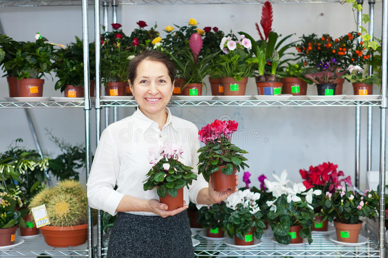 Download Woman Chooses Cyclamen Plant Stock Photo - Image: 36968354