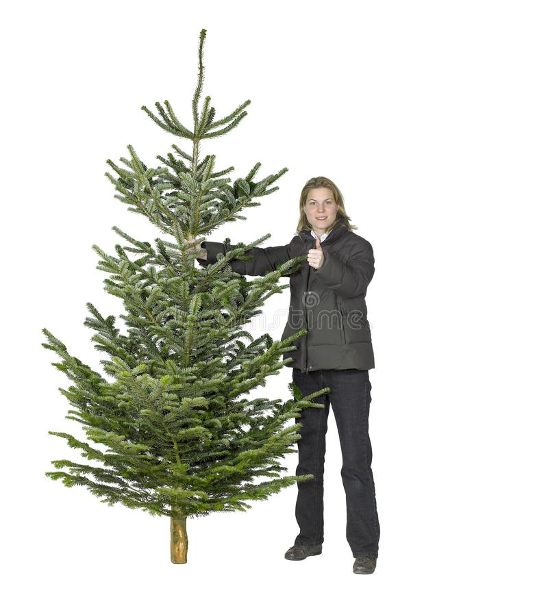Woman and christmas tree. Young woman and christmas tree in white back royalty free stock photo