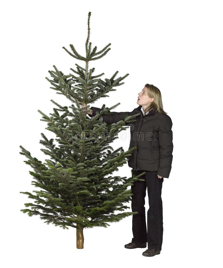 Woman and christmas tree. Young woman and christmas tree in white back royalty free stock image