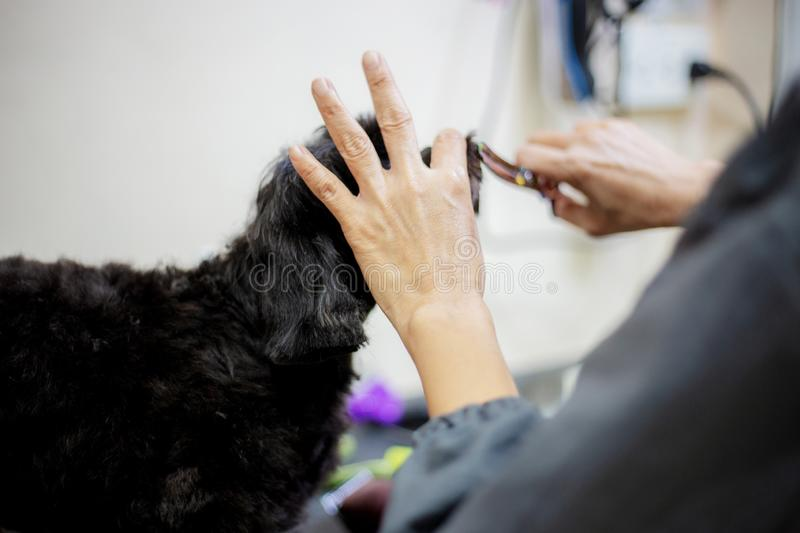 Woman are cleanning dog stock photos