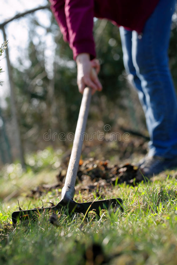 Woman cleans the garden in early spring.  royalty free stock photos