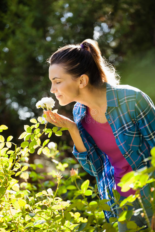 Woman with closed eyes smelling white roses. Smiling woman with closed eyes smelling white roses at backyard stock photography