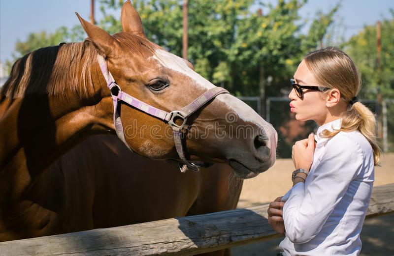 Woman communicates with a horse. Young beautiful woman communicates with a horse royalty free stock photography