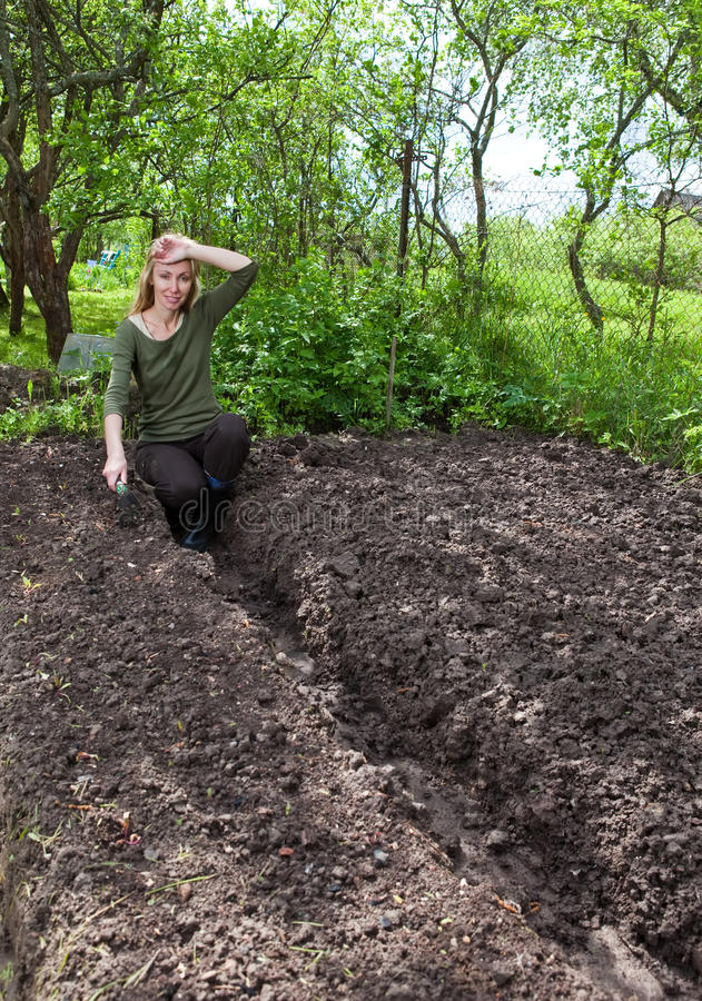 Download Woman Couch A Garden-bed With The First Sprouts Stock Photo - Image of ridge, earth: 24858444