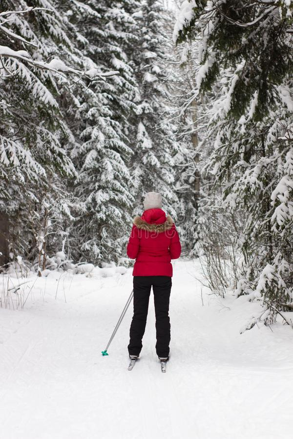 Woman cross country skier in forest on a sunny day stock images