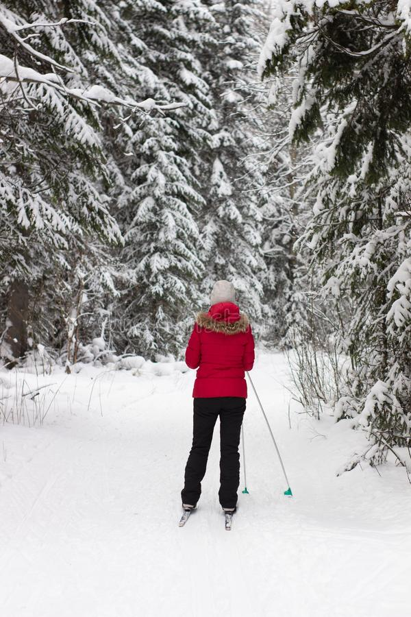Woman cross country skier in forest on a sunny day royalty free stock photography