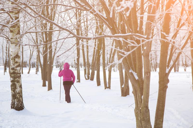 Woman cross country skier in forest on a sunny day stock image