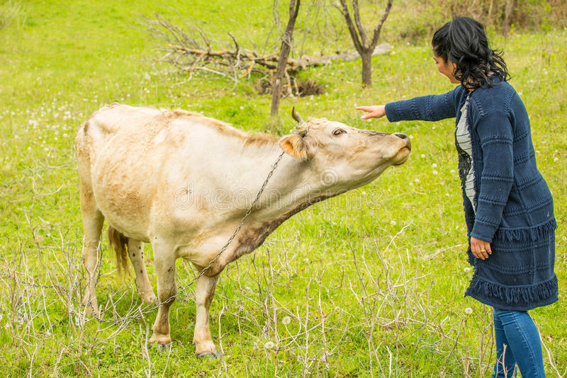Woman cuddling a cow. Happy woman cuddling a cow on a field royalty free stock images