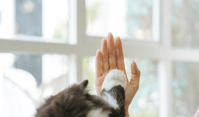Woman and cute cat raising paw giving a high five at home. pet lover concept. royalty free stock photo