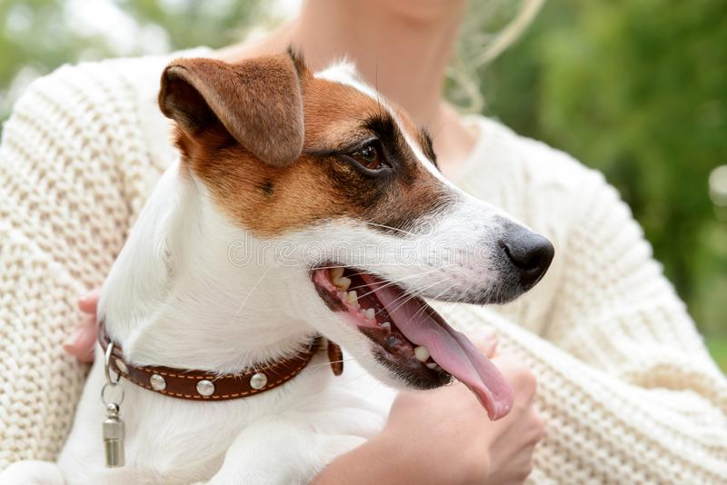 Woman with cute funny dog outdoors, closeup stock photos
